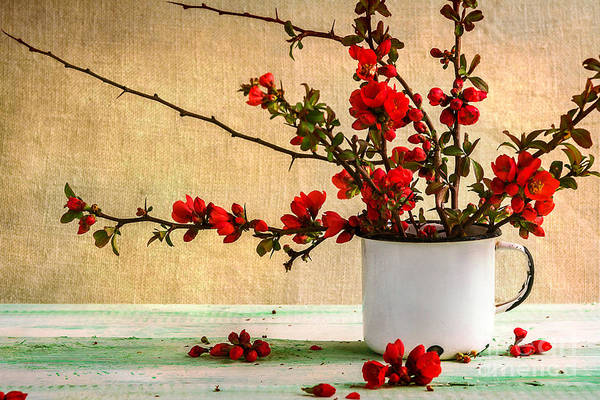 Classical Wall Art - Photograph - Still Life With A Bouquet Of Barberry by Yotka