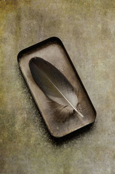 Photograph - Still Life With Brown Feather by Jaroslaw Blaminsky