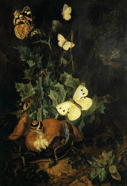 Wall Art - Painting - Still Life With Butterflies, Lizard And Snake by Carl Wilhelm de Hamilton