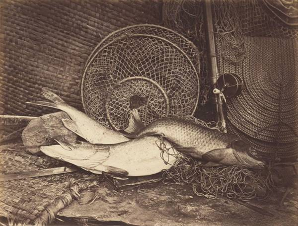 Wall Art - Painting - Still Life With Carp And Pike  by Henry Bailey