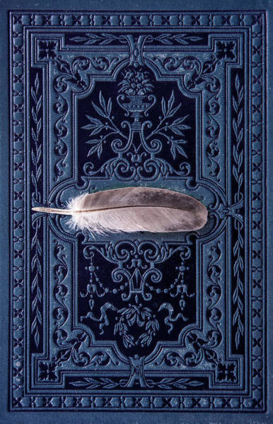 Wall Art - Photograph - Still Life With Grey Feather by Jaroslaw Blaminsky
