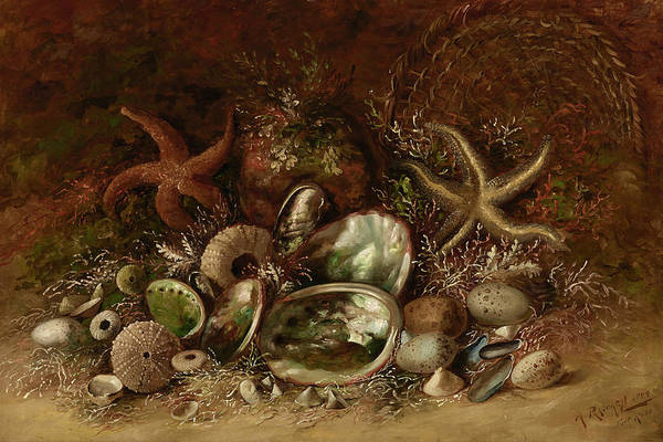 Arthropods Painting - Still Life With Seashells by Henry Raschen