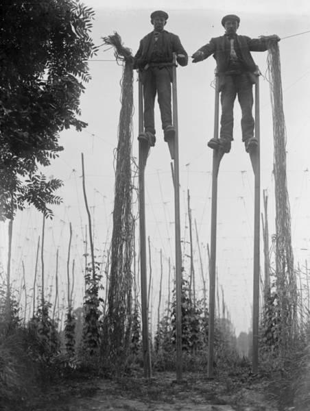 Farm Photograph - Stilt Walkers by Fox Photos