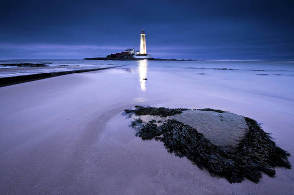 Seaweed Photograph - St.marys Lighthouse, Blue Hour by K.arran - Photomuso