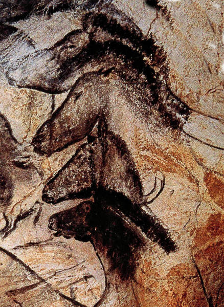 Photograph - Stone-age Cave Paintings, Chauvet, France  by Doc Braham
