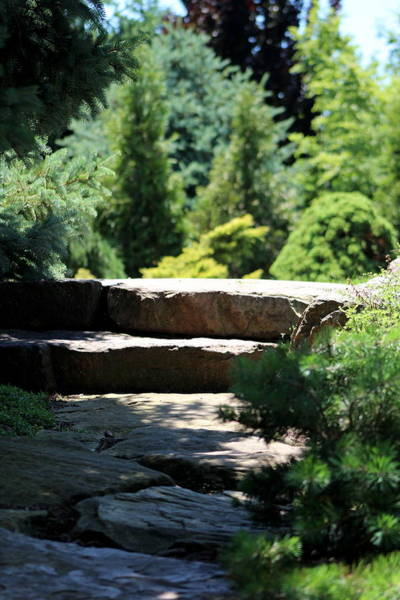 Photograph - Stone Stairs In Chicago Botanical Gardens by Colleen Cornelius