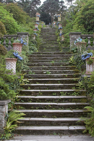 County Cork Wall Art - Photograph - Stone Steps In Garden by Andrew Holt
