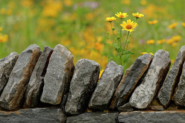 Wall Art - Photograph - Stone Wall And Coreopsis Flowers by Adam Jones