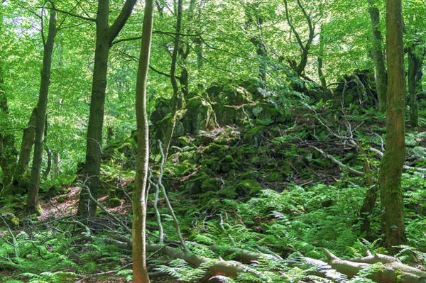 Photograph - Stones In A Forest In Vogelsberg by Sun Travels