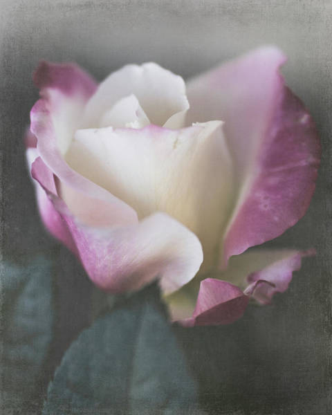 Photograph - Stop And Smell The Roses By Tl Wilson Photography  by Teresa Wilson
