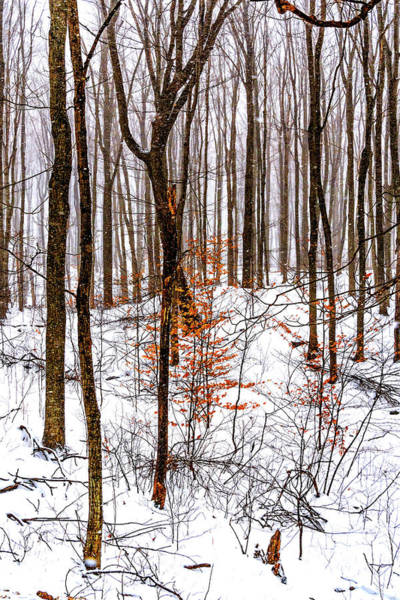 Woodlot Photograph - Stopping By Woods... 2 by Steve Harrington