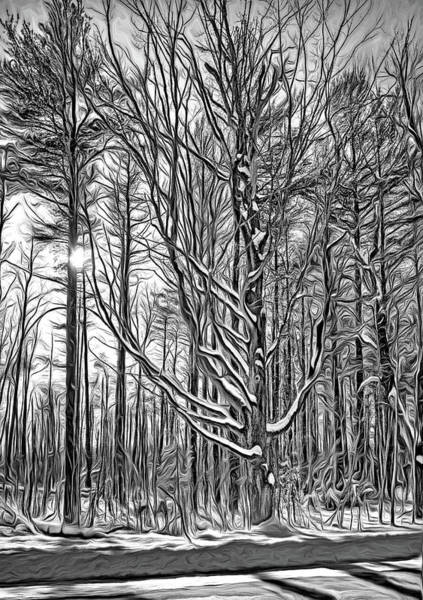 Woodlot Photograph - Stopping On A Country Road - Paint Bw by Steve Harrington