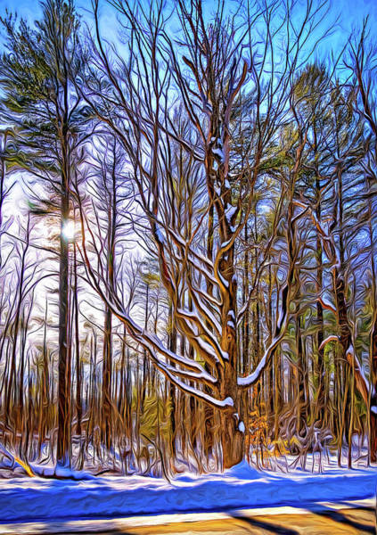Woodlot Photograph - Stopping On A Country Road - Paint by Steve Harrington