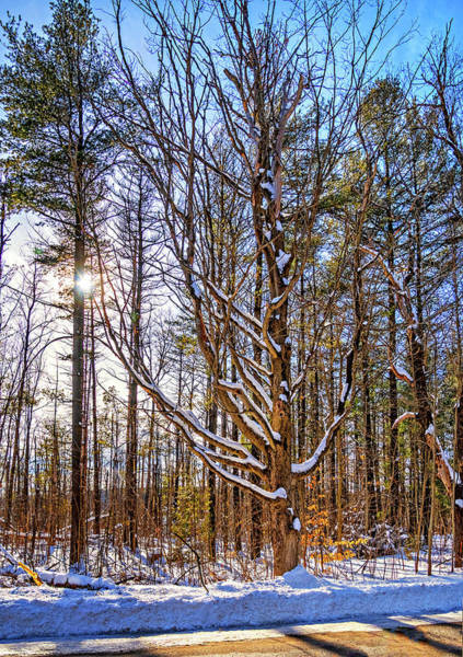 Woodlot Photograph - Stopping On A Country Road by Steve Harrington