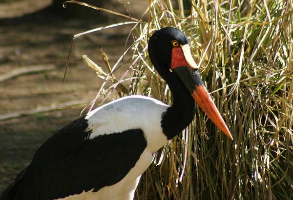 Photograph - Stork by Anthony Jones