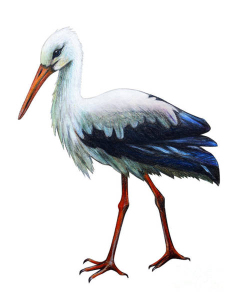 Wall Art - Digital Art - Stork Drawing Ciconia by Viktoriya art