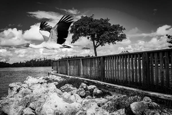 Photograph - Stork In Flight by Carlos Diaz