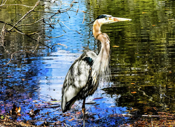 Photograph - Stork Stare by Christina Maiorano