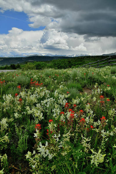 Photograph - Storm Over Dallas Divide Wildflowers by Ray Mathis