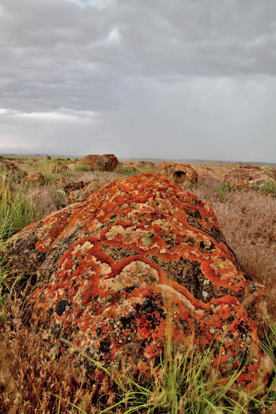Photograph - Storm Over Lichen Covered Boulder by Ray Mathis