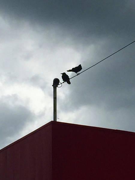 Photograph - Storm Watchers by Matthew Seufer