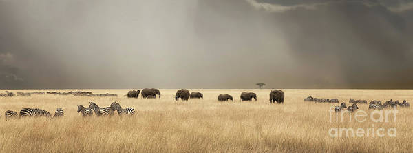 Wall Art - Photograph - Stormy Skies Over The Masai Mara With Elephants And Zebras by Jane Rix