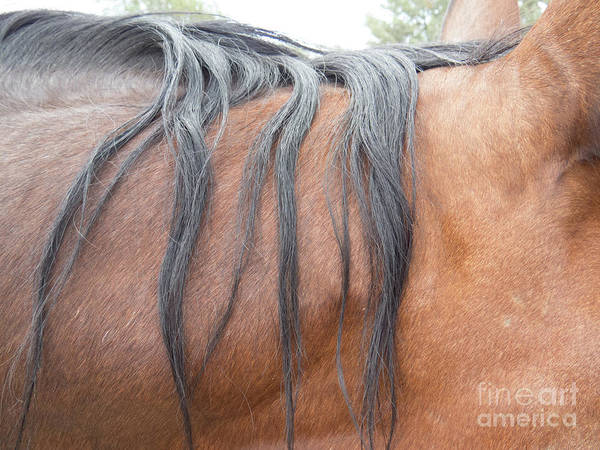 Photograph - Strands Of Horse Mane by Christy Garavetto