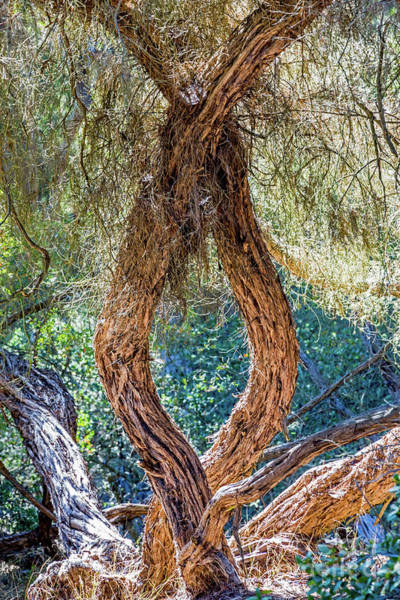 Photograph - Strange Tree by Kate Brown
