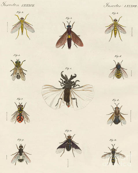 Wall Art - Drawing - Strange Two-winged Insects by German School