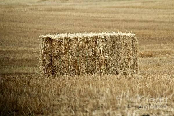 Photograph - Straw Bale by Ann E Robson