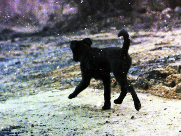 Wall Art - Photograph - Stray Dog by Mark Wootton