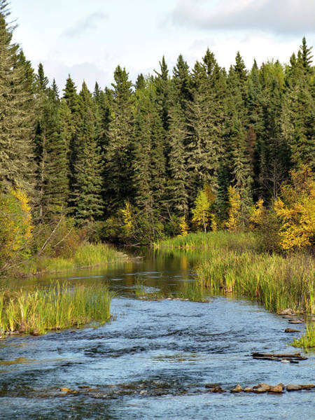 Waskesiu Photograph - Stream And Forest by Dougall photography