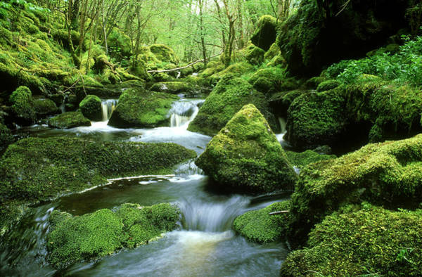 Freshwater Photograph - Stream And Mossy Boulders by Iain Sarjeant