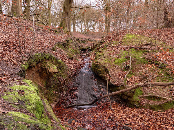 Wall Art - Photograph - Stream At Judy Woods by Mike Walker