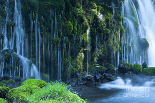 Wall Art - Photograph - Stream In Green Forest by Mp p