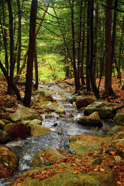 Photograph - Stream Rages Vertical Format by Raymond Salani III