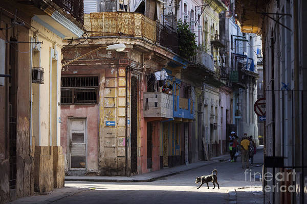 Crumbling Photograph - Street Of Havana, Cuba by Danm12