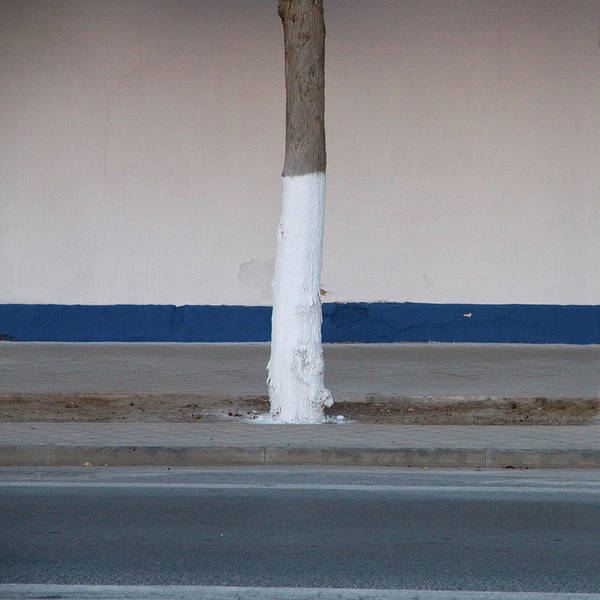 Surroundings Photograph - Street Tree Painted With Reflective by (c) Jaime Monfort