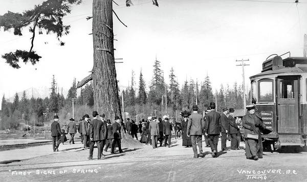 Painting - Streetcar 36 At Stanley Park, 1900s _first Sign Of Spring_ By Philip Timms by Philip Timms