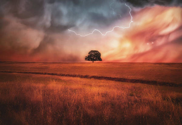 Wall Art - Photograph - Strength In The Storm by Marnie Patchett