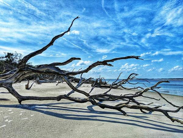 Photograph - Stretch By The Sea by Portia Olaughlin