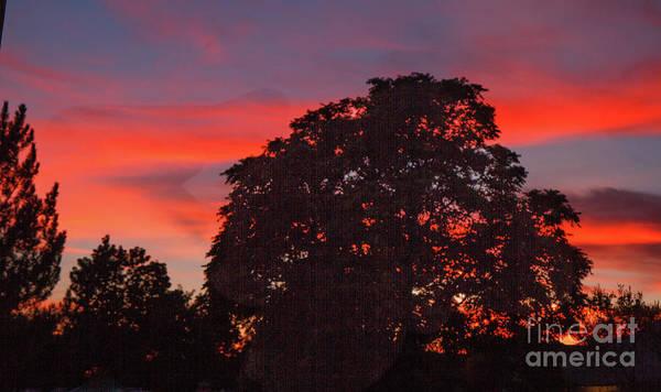 Wall Art - Photograph - Striking Silhouette Sunset by Robert Bales