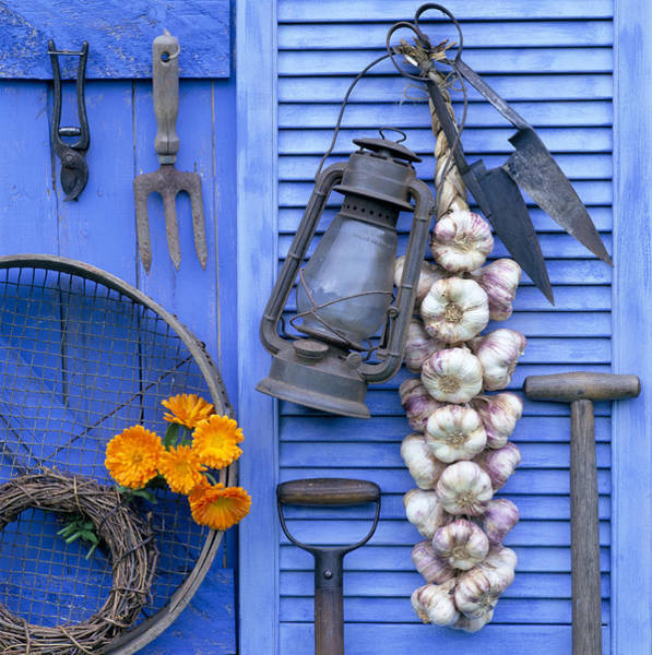 Hanging Photograph - String Of Garlic And Lantern Hanging by James A. Guilliam