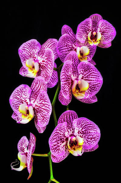 Wall Art - Photograph - String Of Orchids by Garry Gay