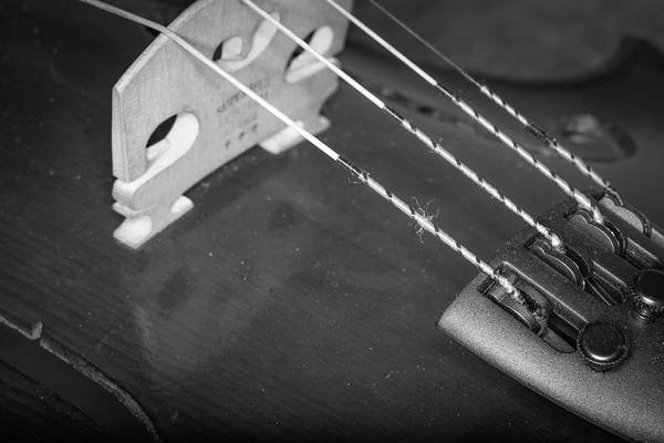Photograph - Strings Series 26 by David Morefield