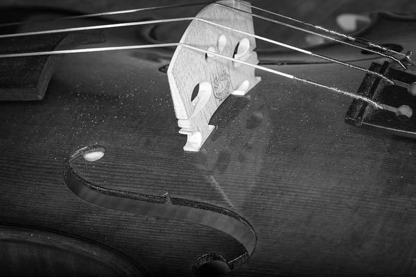 Photograph - Strings Series 40 by David Morefield
