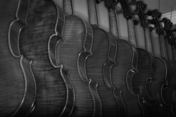Photograph - Strings Series 49 by David Morefield
