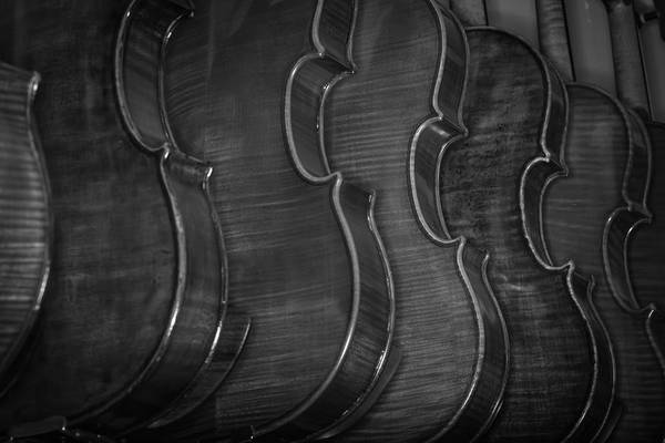 Photograph - Strings Series 50 by David Morefield