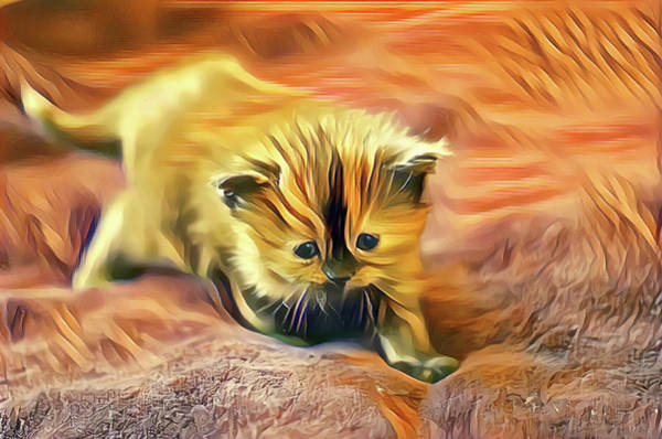 Digital Art - Striped Forehead Kitten by Don Northup