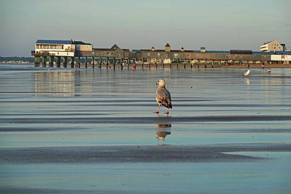 Wall Art - Photograph - Strolling Down Old Orchard Beach Maine by Toby McGuire